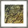 Ghosts Of Crape Myrtles Framed Print by Judi Bagwell