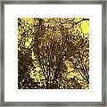 Glisten Framed Print by Ed Smith