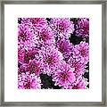 Grape Ice Framed Print by Elizabeth Sullivan