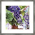 Grape Vines Framed Print by Karen Casciani