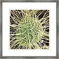 Green Alga, Sem Framed Print by Steve Gschmeissner