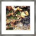 Green Algae Framed Print by Dr Keith Wheeler