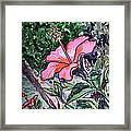 Hibiscus Sketchbook Project Down My Street  Framed Print by Irina Sztukowski
