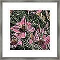 Meadow Sunrise Framed Print by Tom Prendergast