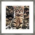 Mediterranean Wild Babe Cat Framed Print by Stelios Kleanthous