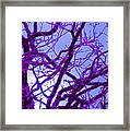 Moon Tree Purple Framed Print by First Star Art
