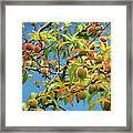 Organic Peach Tree, Framed Print by Pete Starman