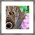 Owl Butterfly Framed Print by Daniel Osterkamp