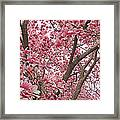 Pink Everywhere Framed Print by Becky Lodes
