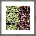 Pluots Grapes And Tomatoes - 5d17903 Framed Print by Wingsdomain Art and Photography