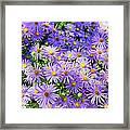 Purple Reigns Framed Print by Joan Carroll
