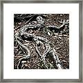 Roots Framed Print by Shane Rees