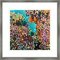 Spotted Goldring Surgeonfish And Coral Framed Print by Beverly Factor