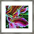 Stargazer Lilies Up Close And Personal Framed Print by Bill Tiepelman