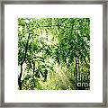 Sun Rays Through Black Walnut Leaves Framed Print by Thomas R Fletcher