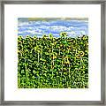 Sunflowers In France Framed Print by Joan  Minchak