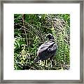 Turkey Vulture - Buzzard Framed Print by EricaMaxine  Price