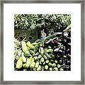 Variety Of Fresh Vegetables - 5d17828 Framed Print by Wingsdomain Art and Photography