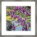 Wedding Bells (dierama Pulcherrimum) Framed Print by Adrian Thomas