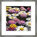Wildflowers On Water Framed Print by Emanuel Tanjala