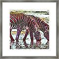 Zebras Framed Print by George Rossidis
