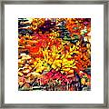 Detail Of Fall Framed Print by Kimberly Simon