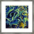 Hiv-infected T Cell, Sem Framed Print by Science Source