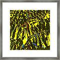 Abstract - Dappled Light Framed Print by Kerri Ligatich
