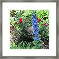 Blue Hollyhock And Red Roses Framed Print by Corey Ford