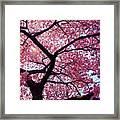 Cherry Tree Framed Print by Mitch Cat