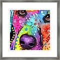 Closeup Labrador Framed Print by Dean Russo
