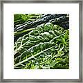 Dark Green Leafy Vegetables Framed Print by Elena Elisseeva