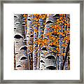 Effulgent October Framed Print by Johnathan Harris