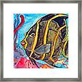 French Kiss-juvenile French Angelfish Framed Print by Kelly     ZumBerge