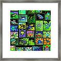 Frogs Poster Framed Print by Nick Gustafson