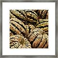 Gourds In White And Green Framed Print by Jame Hayes