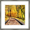 Into The Forest Framed Print by Kathy Jennings
