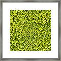 Ivy Wall Framed Print by Andy Smy