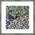 Killdeer 2 Framed Print by Douglas Barnett