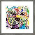 Maltese Puppy Framed Print by Eloise Schneider