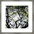 Reach For The Sky Framed Print by Karen Wiles
