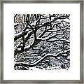 Snowfall And Tree Framed Print by Elena Elisseeva