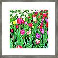 Spring Tulips Flower Field I Framed Print by Artecco Fine Art Photography