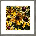 Sun And Shade Framed Print by Jame Hayes