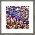 Trout Stream Framed Print by Terril Heilman