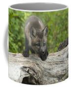 Red Fox Kit Coffee Mug by Sandra Bronstein
