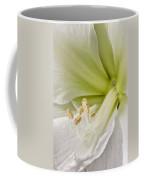 Amaryllis Coffee Mug by Adam Romanowicz