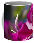 Bauhinia Purpurea - Hawaiian Orchid Tree Coffee Mug by Sharon Mau