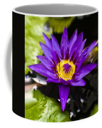 Bayou Beauty Coffee Mug by Scott Pellegrin
