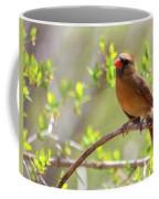 Cardinal In Spring Coffee Mug by Sandi OReilly